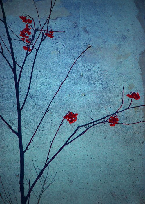 Simplicity Greeting Card featuring the photograph Red Berries Blue Sky by Tara Turner