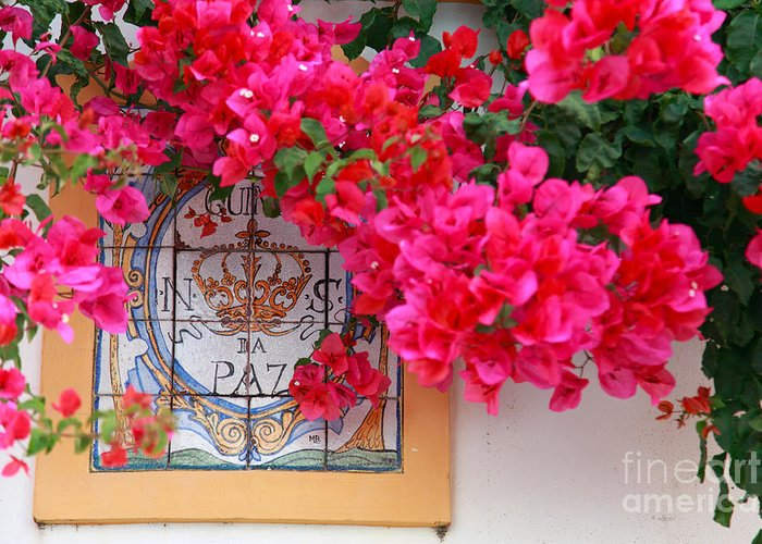 Bougainvilleas Greeting Card featuring the photograph Red Bougainvilleas by Gaspar Avila