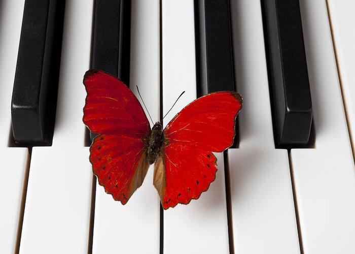 Butterflies Photographs Greeting Cards