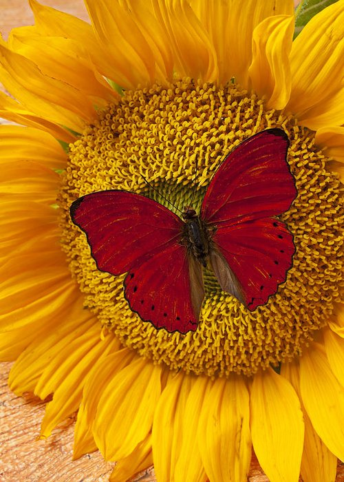 Red Butterfly Sunflower Greeting Card featuring the photograph Red Butterfly On Sunflower by Garry Gay