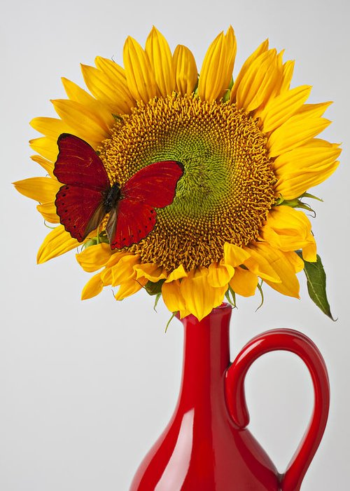 Red Butterfly Sunflower Red Pitcher Greeting Card featuring the photograph Red Butterfly On Sunflower On Red Pitcher by Garry Gay