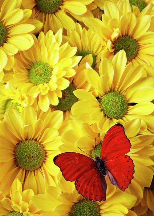 Red Butterfly Yellow Mums Flowers Greeting Card featuring the photograph Red Butterfly On Yellow Mums by Garry Gay