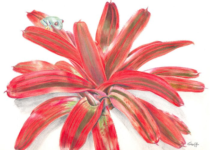 Red-eyed Tree Frog Greeting Card featuring the painting Red-eyed Tree Frog On Bromeliad by Penrith Goff