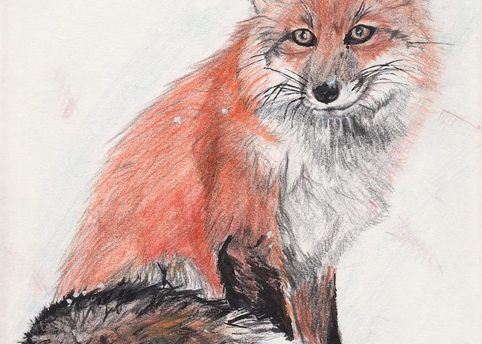 Red Fox Greeting Card featuring the drawing Red Fox In Snow by Marqueta Graham