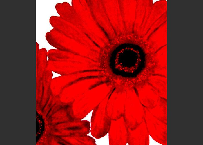 Painting Greeting Card featuring the painting Red Gerber Border   Digital Art by Marsha Heiken