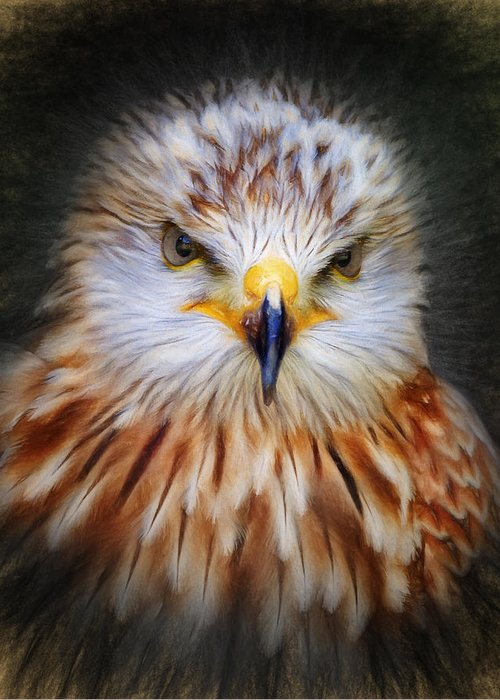 Red Greeting Card featuring the digital art Red Kite by Ian Merton