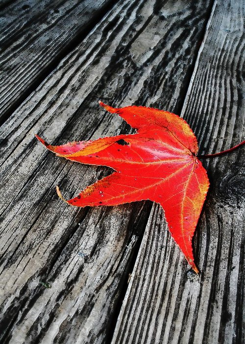 Nature Greeting Card featuring the photograph Red Leaf by Linda Sannuti