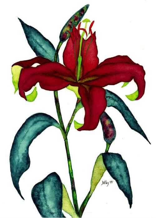 Watercolor Greeting Card featuring the painting Red Lily by Stephanie Jolley