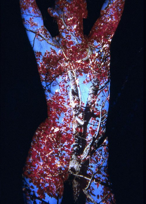 Nature Fusion Greeting Card featuring the photograph Red Maple by Arla Patch