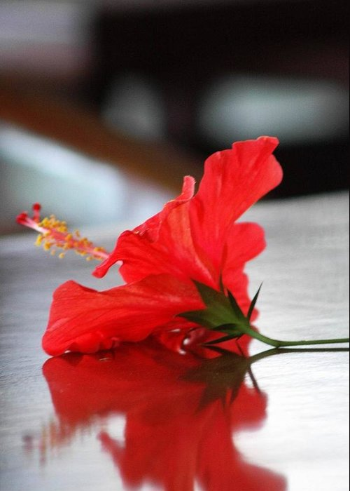 Flower Greeting Card featuring the photograph Red On Table by Mario Bennet