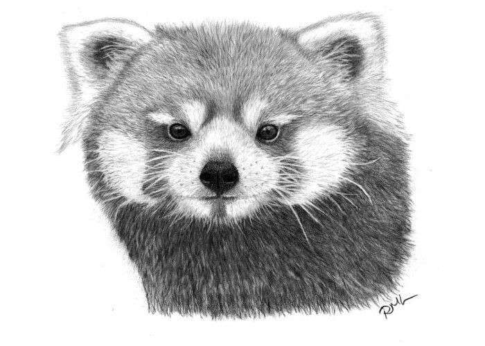 Red Panda Drawings Greeting Card featuring the drawing Red Panda by Rosanna Maria