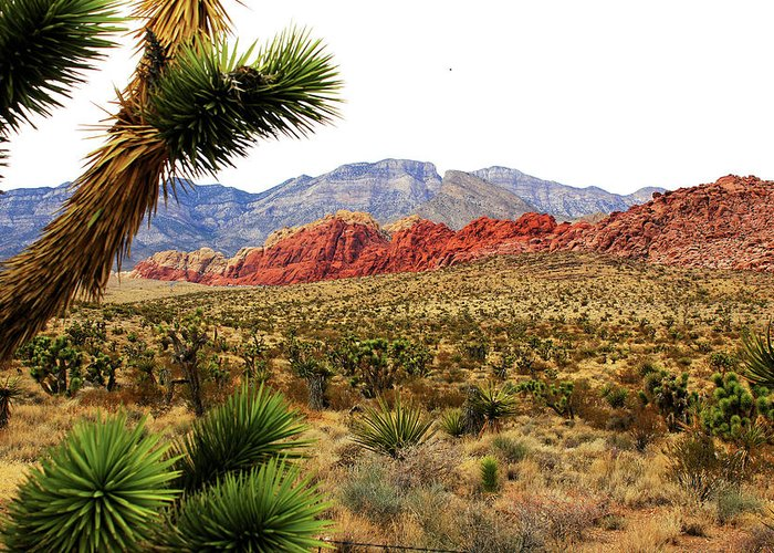 Canyons Greeting Card featuring the photograph Red Rock Canyon by Paul Lamonica