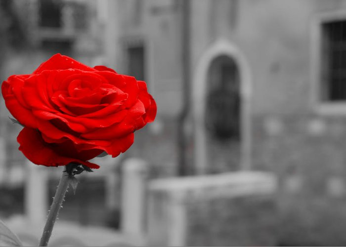 Venice Greeting Card featuring the photograph Red Rose with Black and White Background by Michael Henderson