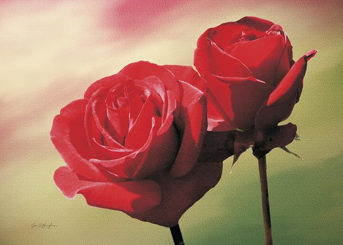 Roses Greeting Card featuring the painting Red Roses by Jan Baughman