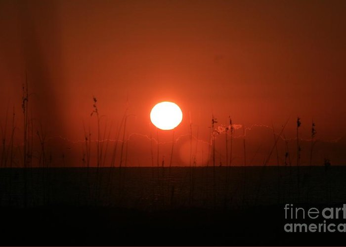 Sunset Greeting Card featuring the photograph Red Sunset And Grasses by Nadine Rippelmeyer