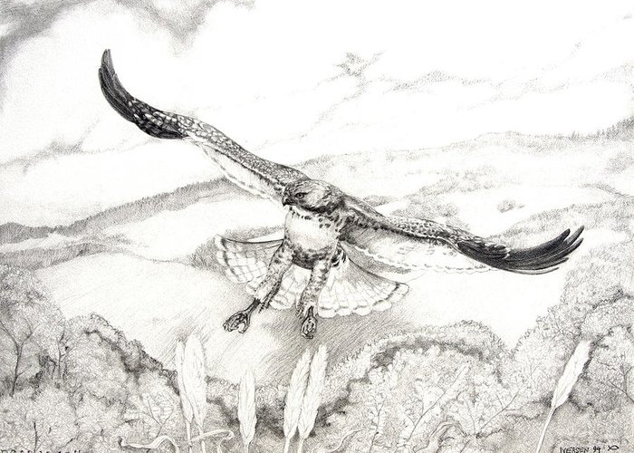 Red-tailed Hawk Greeting Card featuring the drawing Red-tailed Hawk Of Psalm 104 by Jill Iversen
