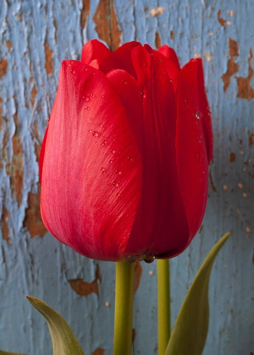 Red Greeting Card featuring the photograph Red Tulip by Garry Gay