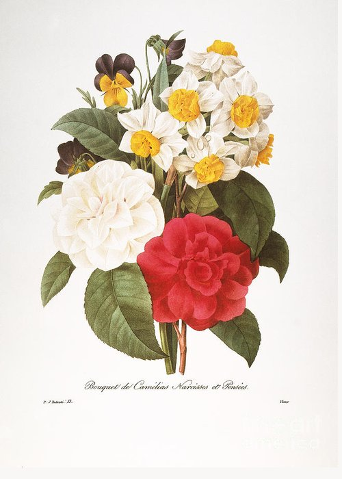 1833 Greeting Card featuring the photograph Redoute: Bouquet, 1833 by Granger