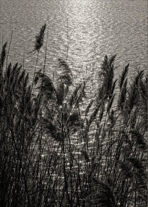 Reeds Greeting Card featuring the photograph Reeds 2 by Robert Ullmann