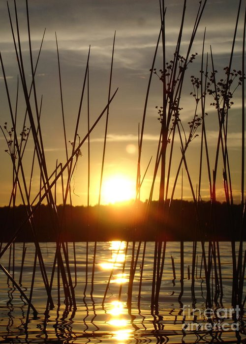 Landscape Greeting Card featuring the photograph Reeds In A Lake by Chad Natti