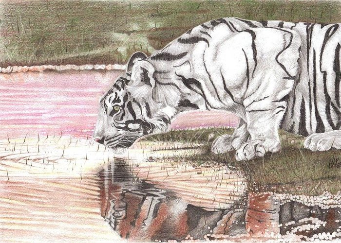 Tiger Greeting Card featuring the drawing Reflecting by Dustin Knighton