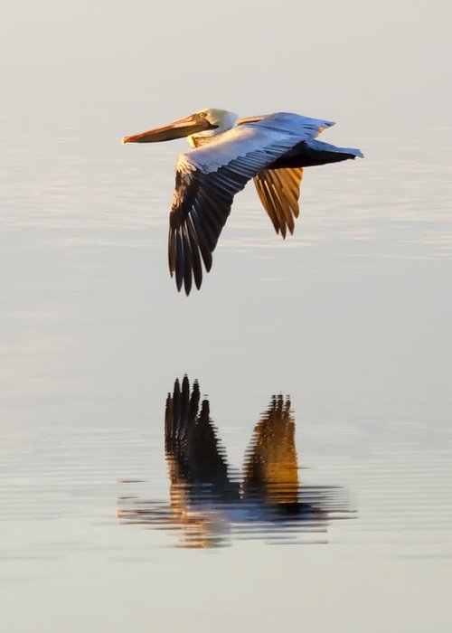 Pelican Greeting Card featuring the photograph Reflecting Flight by Janet Fikar