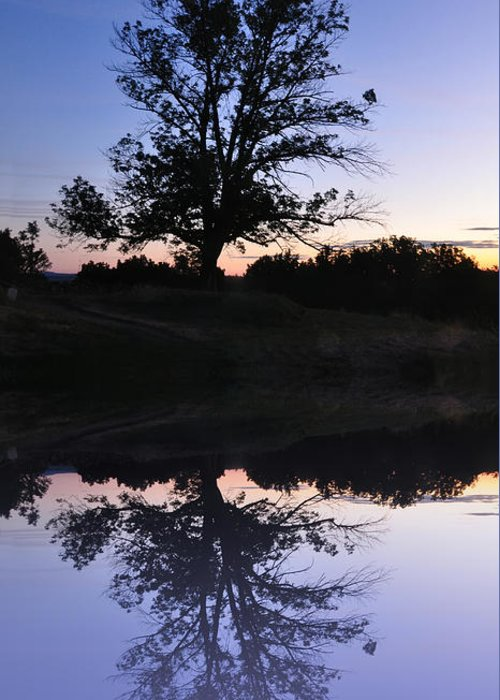 Reflecting Greeting Card featuring the photograph Reflecting Tree by Bill Cannon
