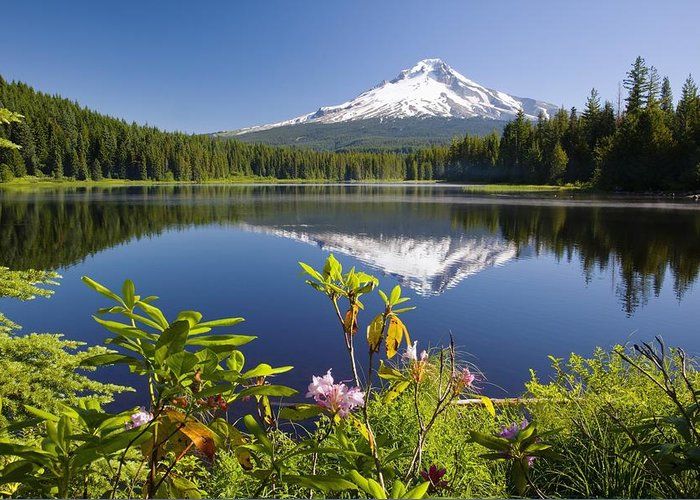 Flowers Greeting Card featuring the photograph Reflection Of Mount Hood In Trillium by Craig Tuttle