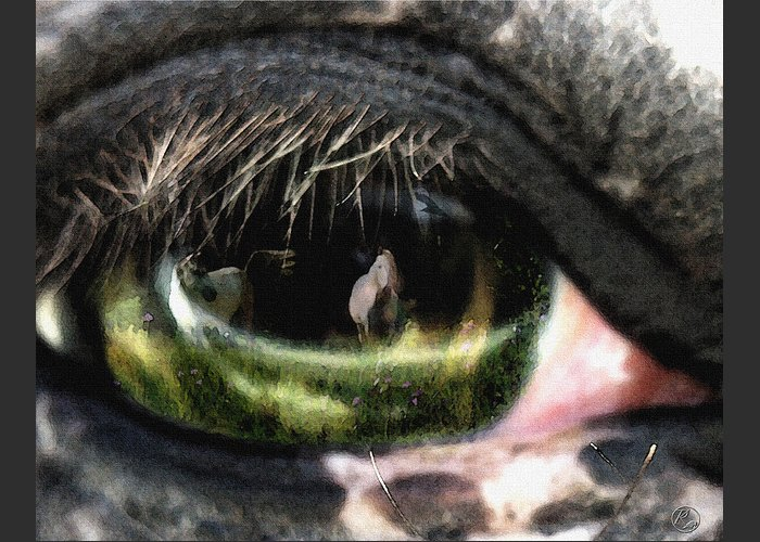Horse Greeting Card featuring the photograph Reflection by Perri Kelly