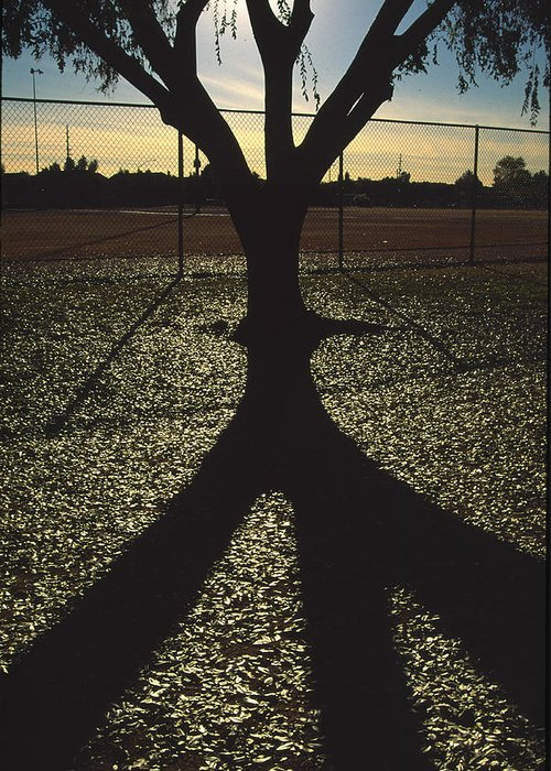 Tree Greeting Card featuring the photograph Reflections In A Park by Randy Oberg