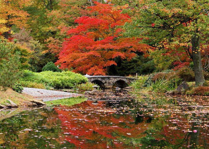 Fall Greeting Card featuring the photograph Reflections Of Autumn by Jean Haynes
