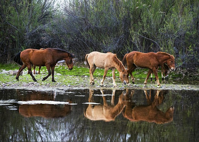 Wild Horses Greeting Card featuring the photograph Reflections Of Wild Horses In The Salt River by Dave Dilli