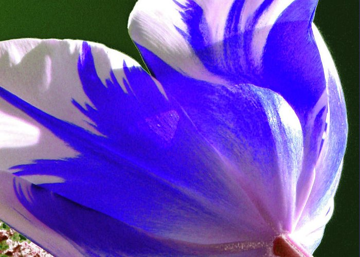 Floral Greeting Card featuring the photograph Reigning Tulips by Christine Belt