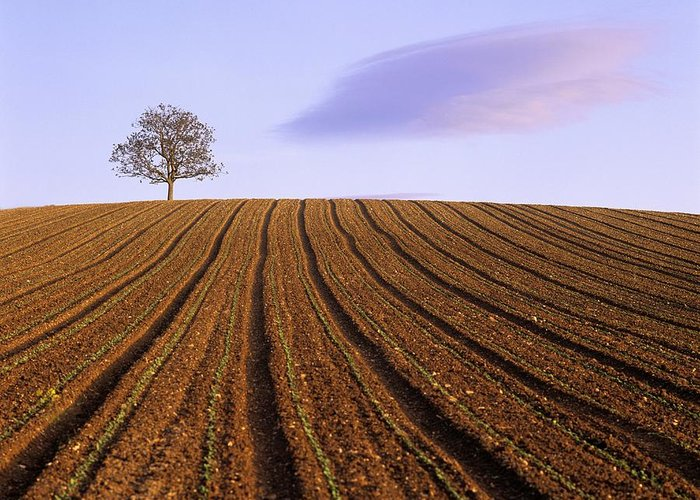 Agriculture Greeting Card featuring the photograph Remote Tree In A Ploughed Field by Bernard Jaubert