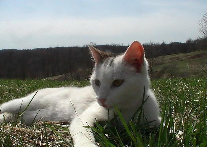 Kitten Takes A Break Greeting Card featuring the photograph Resting In The Grass by Pat Nalls