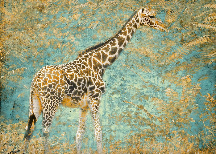 Pittsburgh Zoo Greeting Card featuring the photograph Reticulated by Arne Hansen