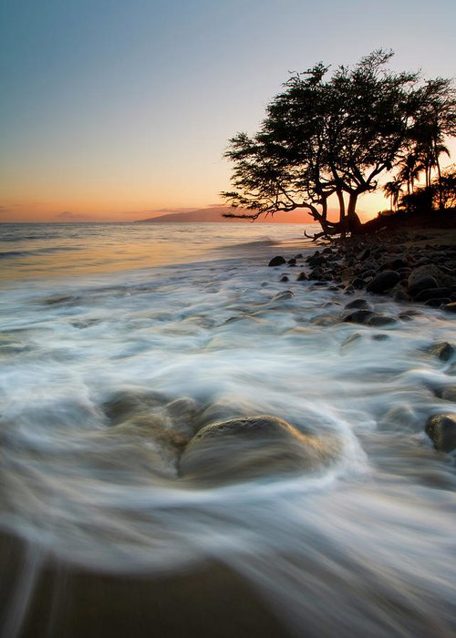Tree Greeting Card featuring the photograph Return To The Sea by Mike Dawson