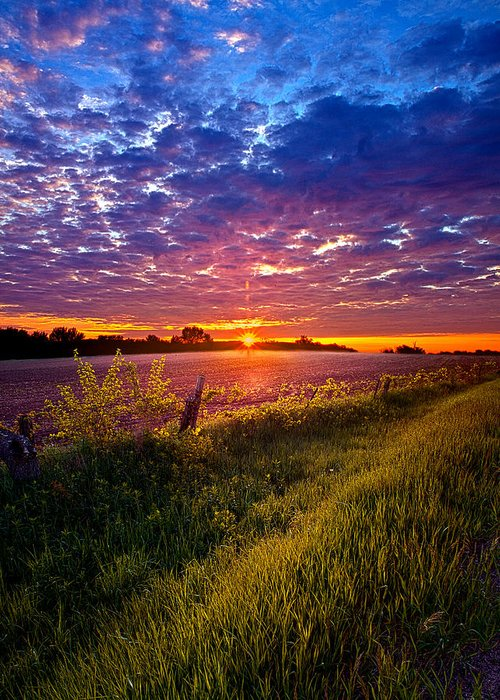 Horizons Greeting Card featuring the photograph Revival by Phil Koch