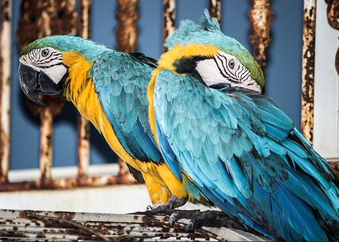 Birds Greeting Card featuring the photograph RGB by Dmitriy Laria