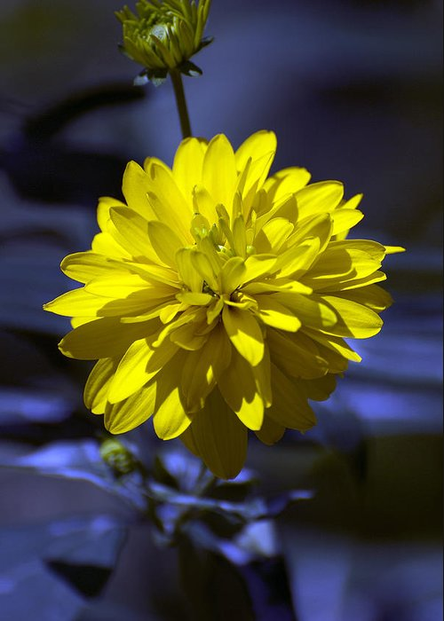 Yellow Greeting Card featuring the photograph Rhapsody In Blue by Adrian Bud