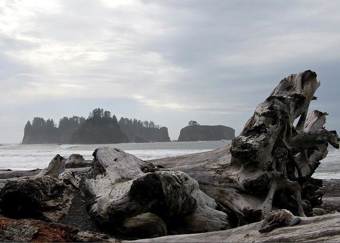 Beach Greeting Card featuring the photograph Rialto Beach by Porter Glendinning