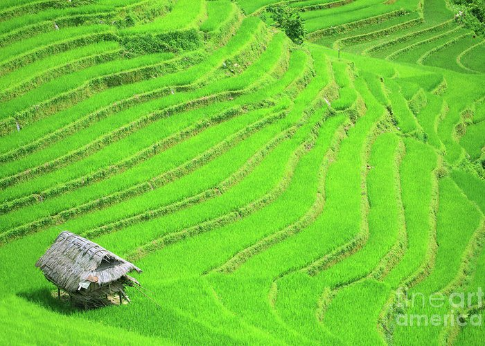 Terraces Greeting Card featuring the photograph Rice Field Terraces by MotHaiBaPhoto Prints