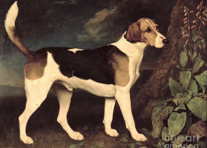 George Stubbs Greeting Card featuring the painting Ringwood by George Stubbs