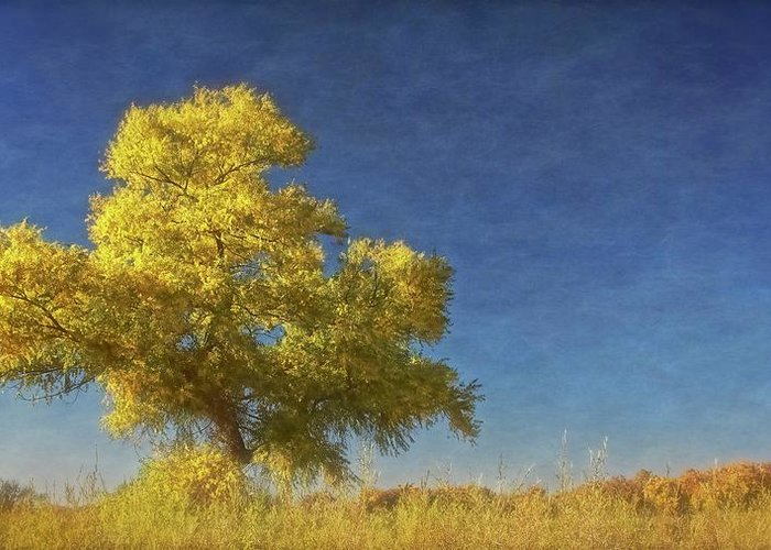 Nature Greeting Card featuring the photograph Rio Grande Bosque Blue and Gold, New Mexico by Zayne Diamond Photographic