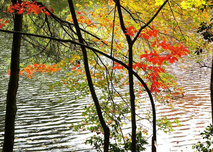 Autumn Colors Greeting Card featuring the photograph Ripples by Cindy Gacha
