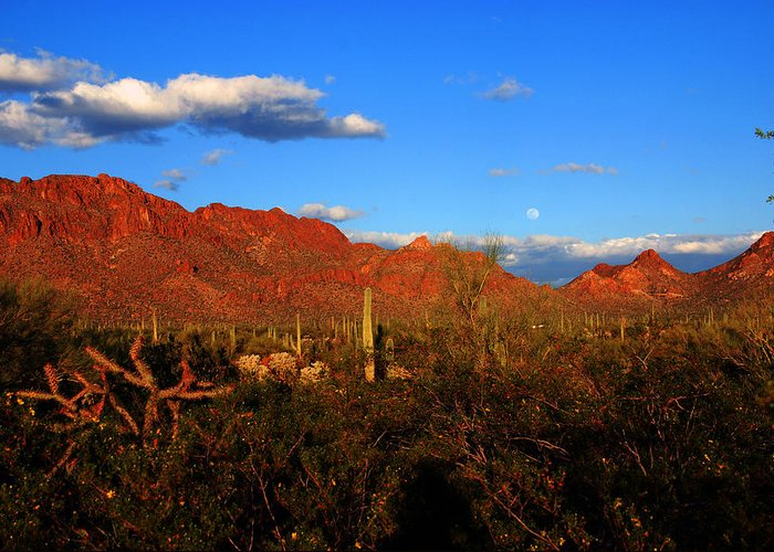 Rising Moon Greeting Card featuring the photograph Rising Moon In Arizona by Susanne Van Hulst