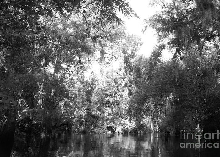 Black Greeting Card featuring the photograph River Wooded by Jack Norton