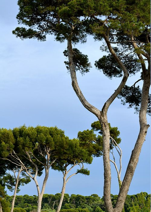 Tree Greeting Card featuring the photograph Riviera Trees by Corinne Rhode
