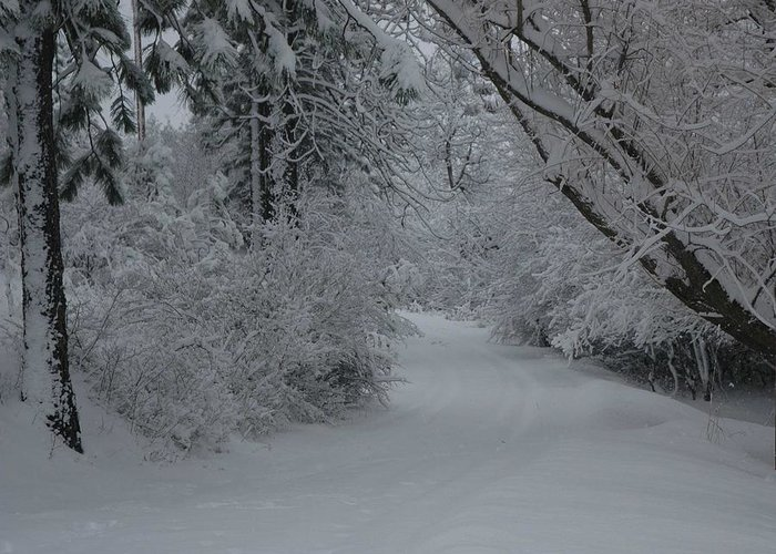 Snow Canopy Greeting Card featuring the photograph Road Out by Nancy Rohrig
