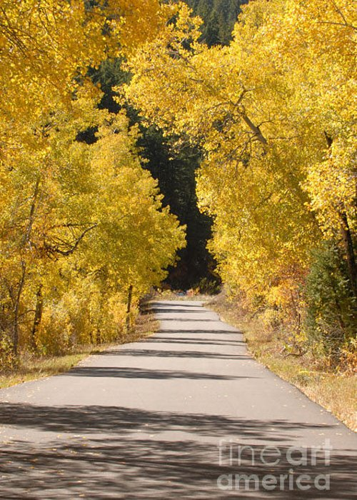 Autumn Greeting Card featuring the photograph Road To Autumn by Dennis Hammer
